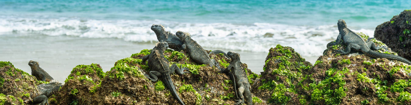Island Hopping in the Galapagos Islands