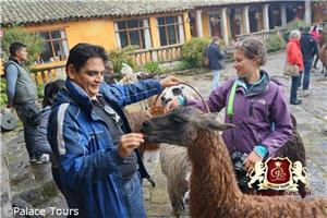 Visit the Llamas at San Augustin de Callo Hacienda