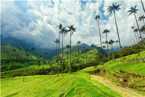 Hike through the Cocora Valley