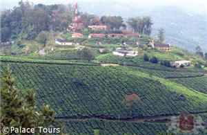 Herbs and teas grow in abundance in Kerala