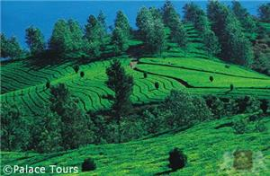 Breathtaking views in Munnar