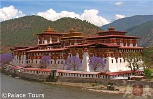 Punakha Dzong and Jacaranda trees