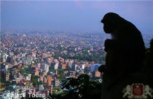 A monkey overlooking Kathmandu from the Monkey Temple