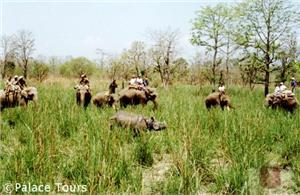 Explore Chitwan National Park the back of an elephant