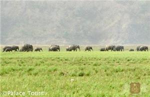 A herd of Indian wild elephants in the Jim Corbett National Park
