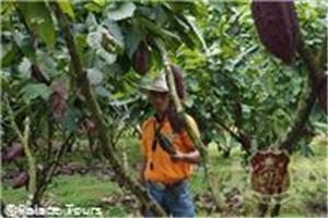 Tour the Cocoa Plantation