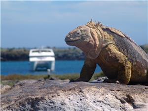 Treasures of Galapagos