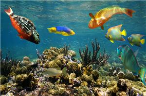 Fish in San Andres